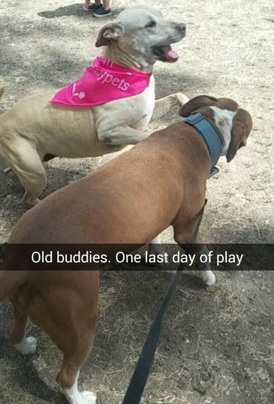 Ilyen egy beteg kutya utolsó földön töltött napja