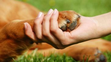 Milyen-kutya-illik-hozzád-a-csillagjegyed-szerint-Ha-kíváncsi-vagy-ne-hagyd-ki