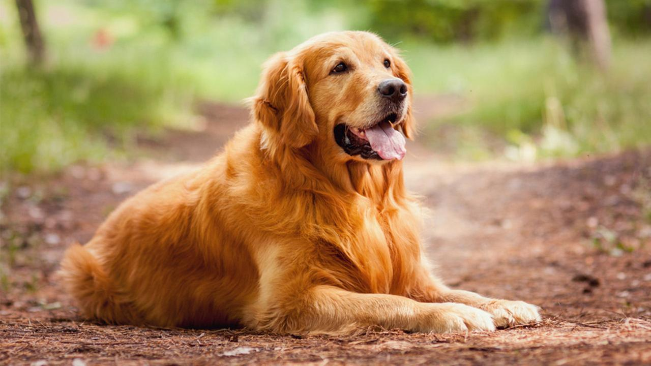 Ilyen kutya illik hozzád a csillagjegyed szerint
