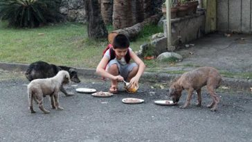 Kisfiú eteti a kutyákat