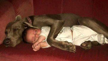 15 fotó mely bizonyíték arra, miért kell a gyereknek kutyával felnőni. A 4-es kép egyszerűen zseniális!