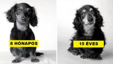 Így öregszenek meg a kutyák: egy izgalmas fotósorozat, amely a szívedbe markol!