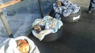 Három kóbor kutya aludt éjjel abuszmegállóban. Az ott dolgozók megható dolgot tesznek!