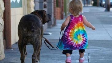 15 kép ami azt mutatja, miért kell egy gyermekek kutyával felnőni. A 4.-ik kép verhetetlen!