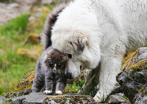 19 bizonyíték, hogy nem is olyan ritka a kutya-macska barátság