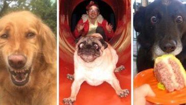 22 vicces kutya, akik minden gazdit megnevettetnek