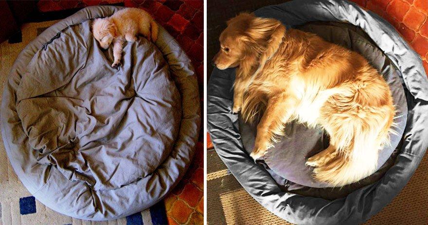 23 zabálnivaló kutyus régen és most.