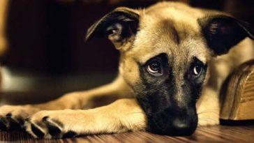 A kutyád vagyok és szeretnék egy apróságot megosztani veled