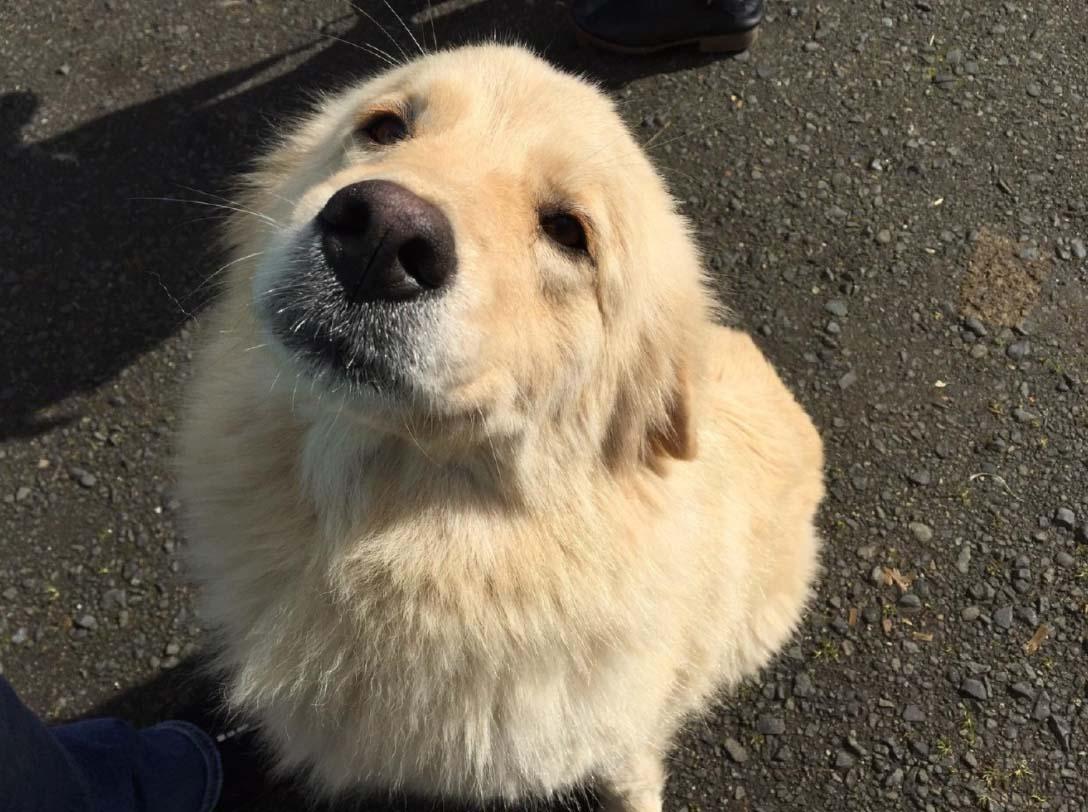 A kutyának 7 kicsinye halt meg a tűzben