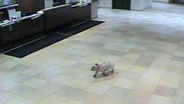 A kutya elszökött otthonról és sehol nem találták. Sírni támad kedvünk, amikor megtudjuk hova ment!