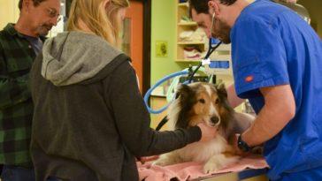 A kutya nem bír lábra állni és el akarják altatni. De az állatorvos észrevesz valamit a füle mögött!