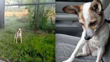 Egy elhagyott sánta kutya sír az út szélén