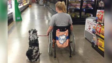 Terápiás kutya segít a lánynak