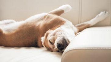 Miről álmodnak a kutyák