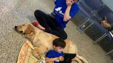 kutya segít a kisfiúnak