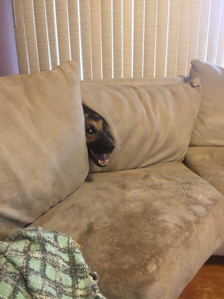 11 kutya, akiknek fogalmuk sincs a bútorok használatáról. Az utolsó mindent visz!