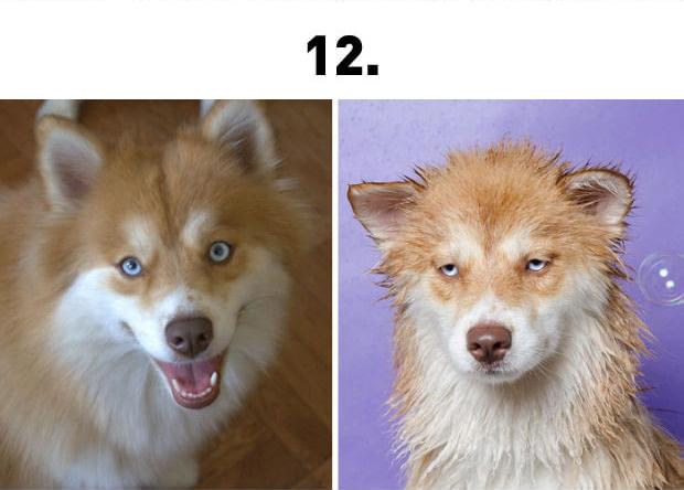 kutyafurdeselott12