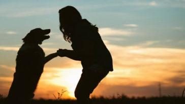 megható verset írt a nő kutyája halála után