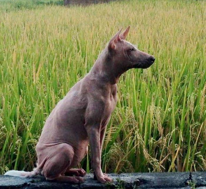 15 fotó egy kutya hihetetlen átalakulásáról, aki egész életét az utcán töltötte