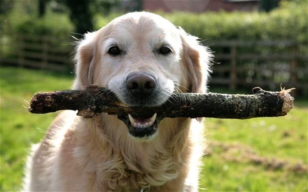 stick-dog_2603828b