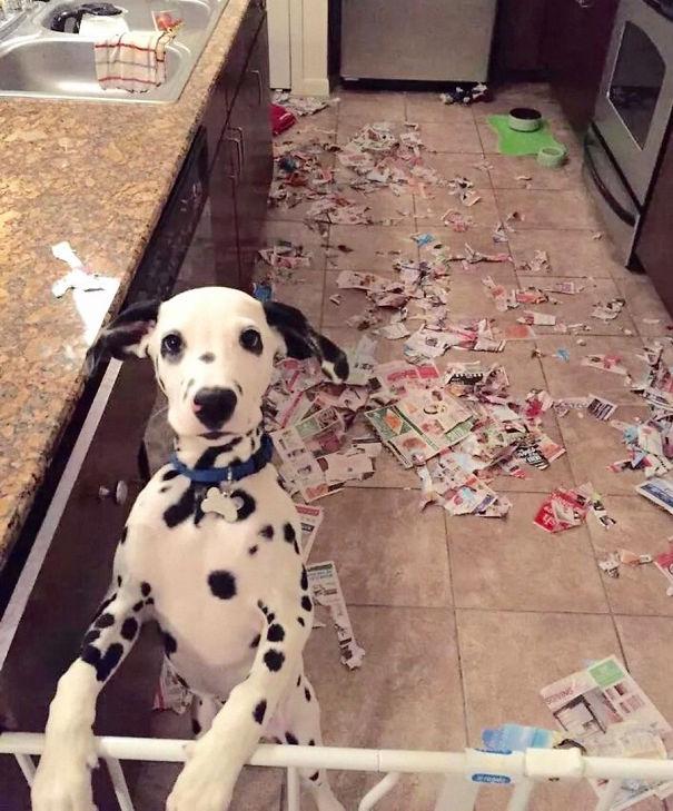 18 bizonyíték, hogy a kutyák is tudnak szemetek lenni.