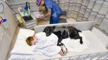 terápiás kutya segít a kisfiúnak