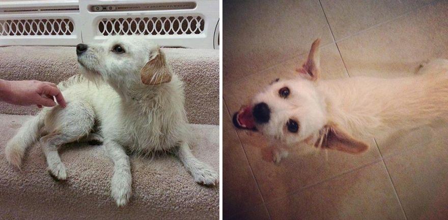 12 állat előtte és utána képe, akiket hazavittek a menhelyről10