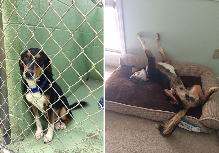 12 állat előtte és utána képe, akiket hazavittek a menhelyről3