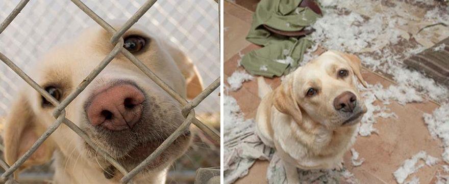 12 állat előtte és utána képe, akiket hazavittek a menhelyről6