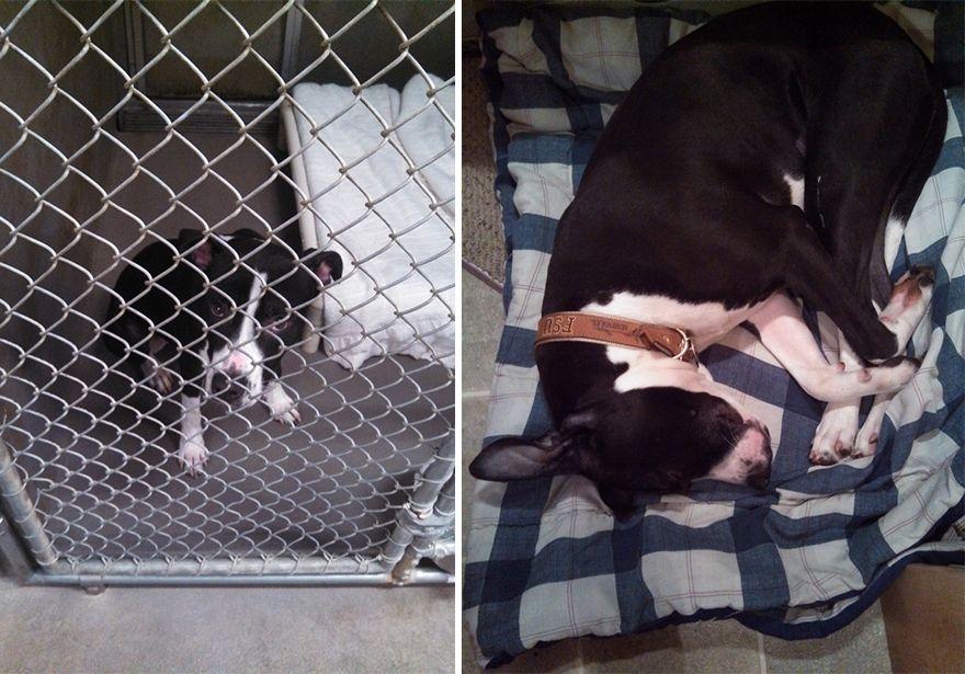 12 állat előtte és utána képe, akiket hazavittek a menhelyről8