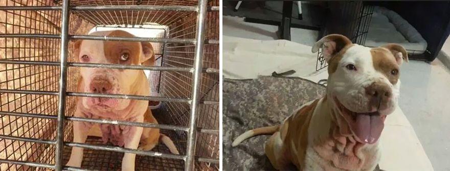 12 állat előtte és utána képe, akiket hazavittek a menhelyről9