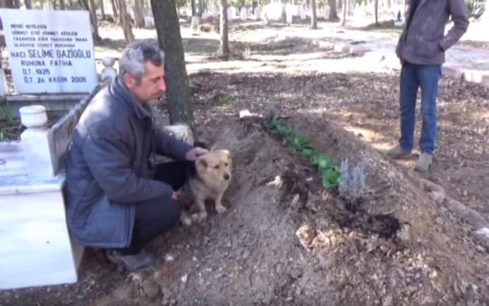 A kutya szomorú arccal ül gazdája koporsója alatt. De ezután nagyon megható dolog történik