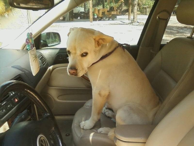 15 kutya, akik jelen pillanatban duzzognak valamiért10