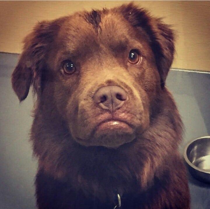 15 kutya, akik jelen pillanatban duzzognak valamiért9