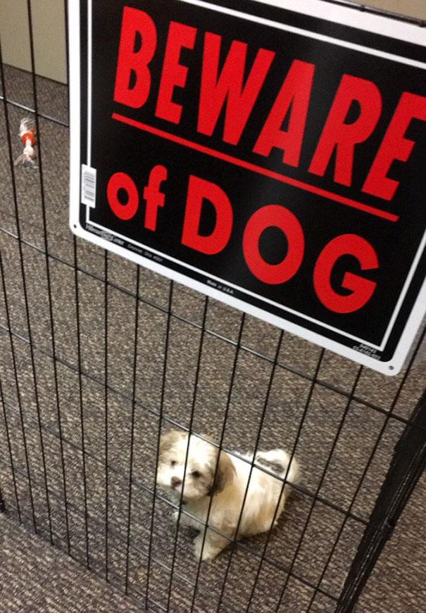 """17 cuki eset, amikor a """"Harapós kutya"""" tábla értelmét vesztette"""