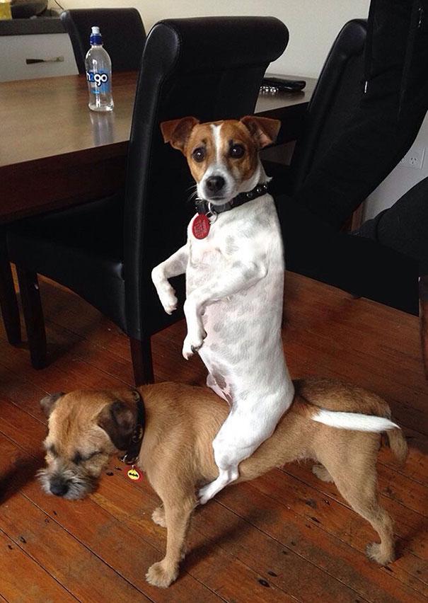 19 kutya, aki szemmel láthatóan eltér az átlagostól15