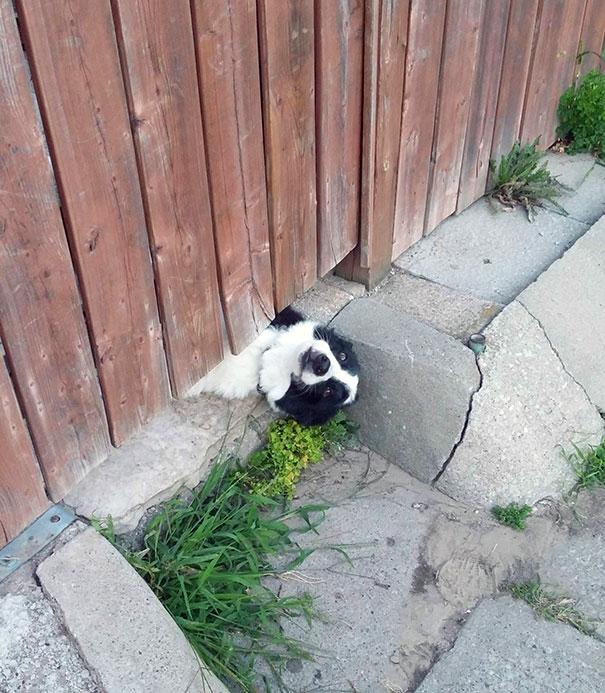 19 kutya, aki szemmel láthatóan eltér az átlagostól18