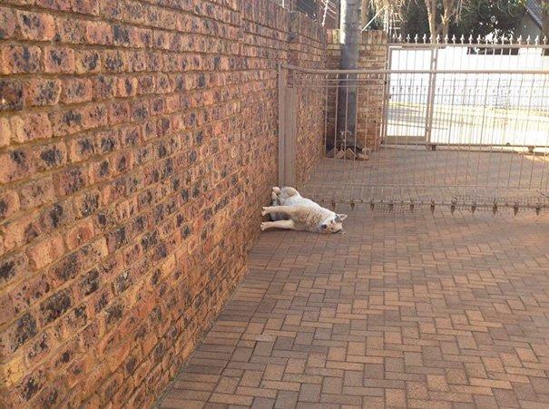 19 kutya, aki szemmel láthatóan eltér az átlagostól2