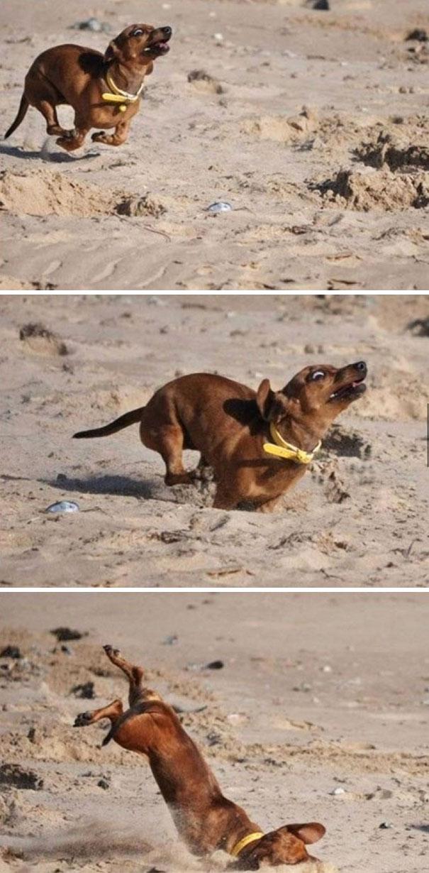 21 béna kutya, akik akaratlanul is mosolyt csalnak mindenki arcára15