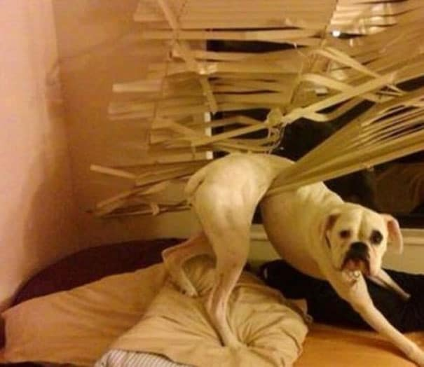21 béna kutya, akik akaratlanul is mosolyt csalnak mindenki arcára19