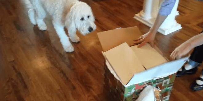 Kutya olyan csodálatos ajándékot kapott születésnapjára