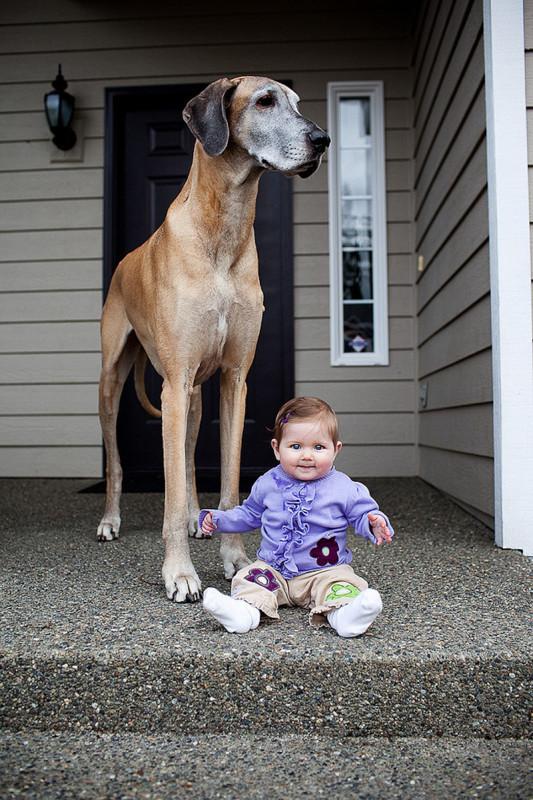 családias kutyák10