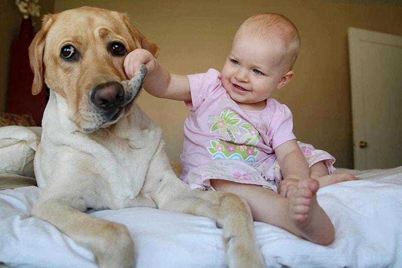 családias kutyák11