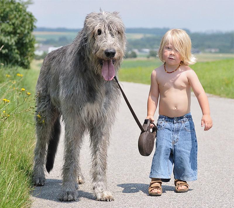 családias kutyák12