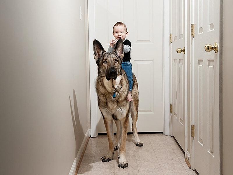 családias kutyák13