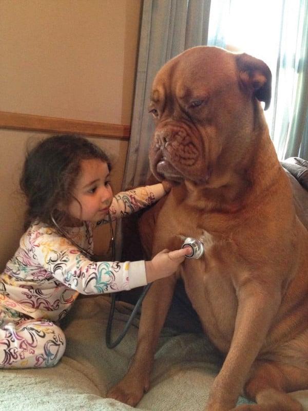 családias kutyák14