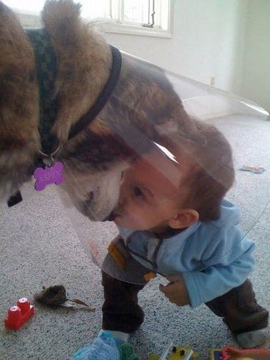 családias kutyák16