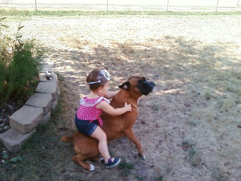 családias kutyák17