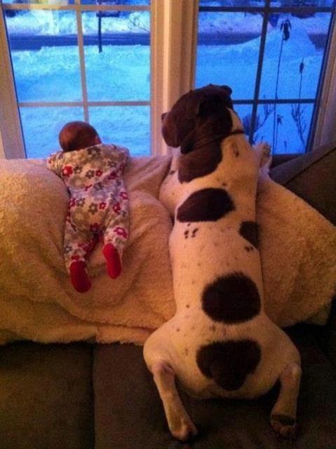 családias kutyák20