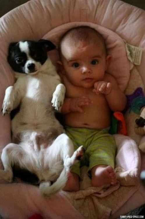családias kutyák21